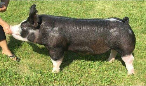 Chewbecca Berk 4-4 Photo