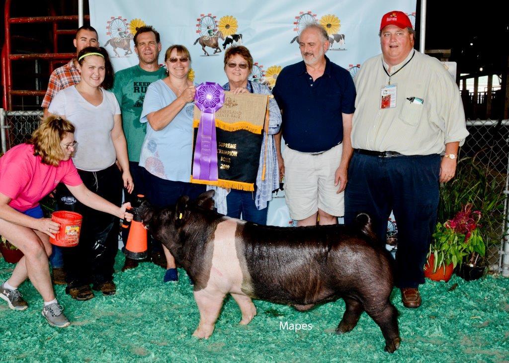 Supreme Overall & Champion Hamp Boar